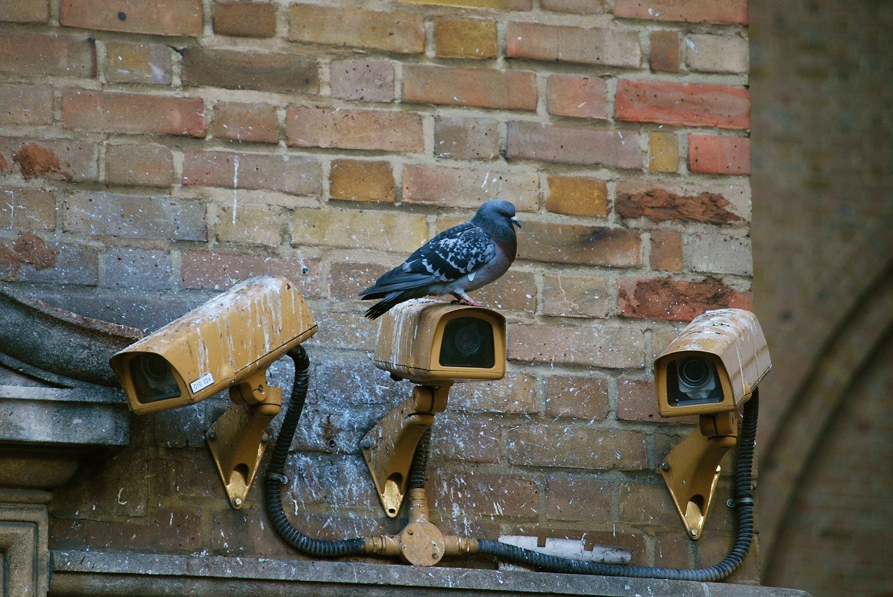 camera, spy, pigeon