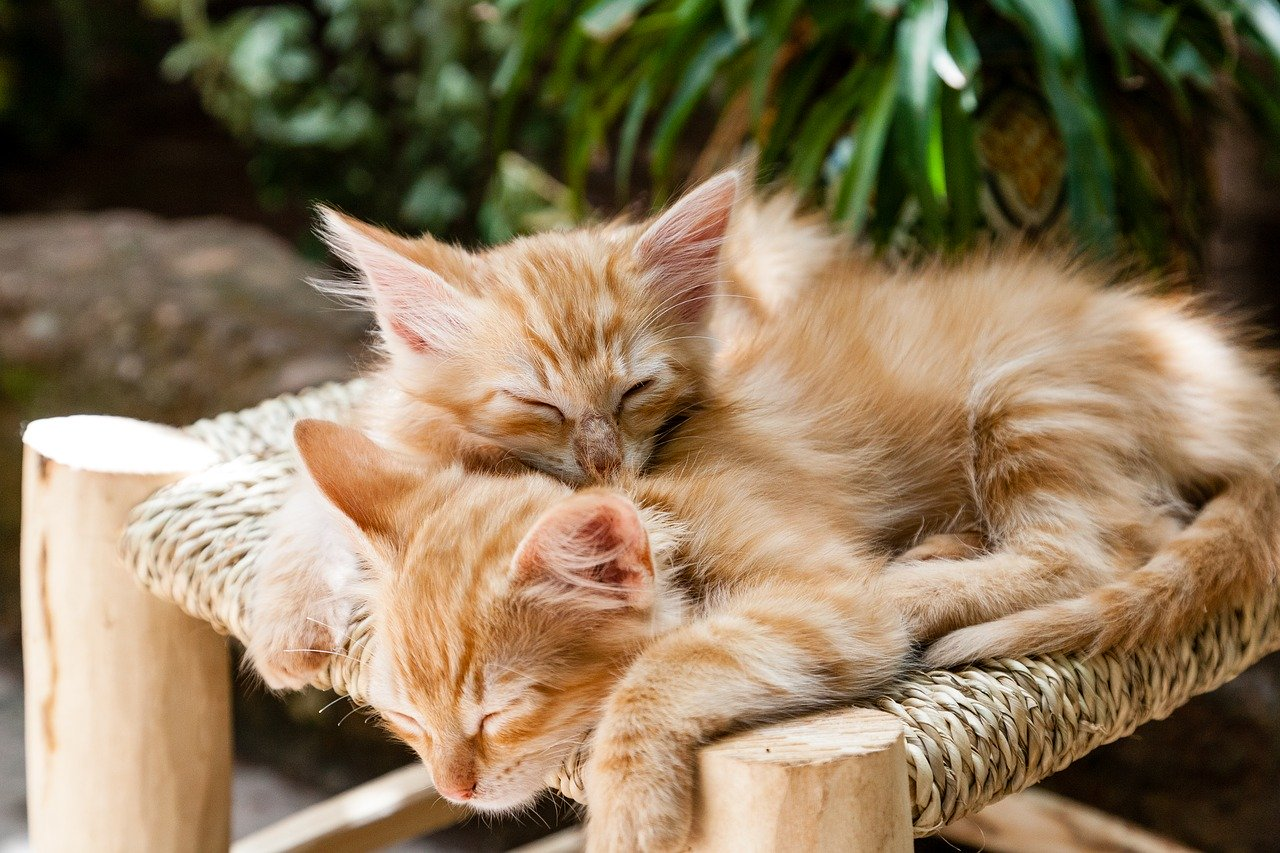 kittens, pets, sleeping